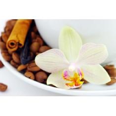 Vanilla - 10 Capsules -Intensity 7, medium